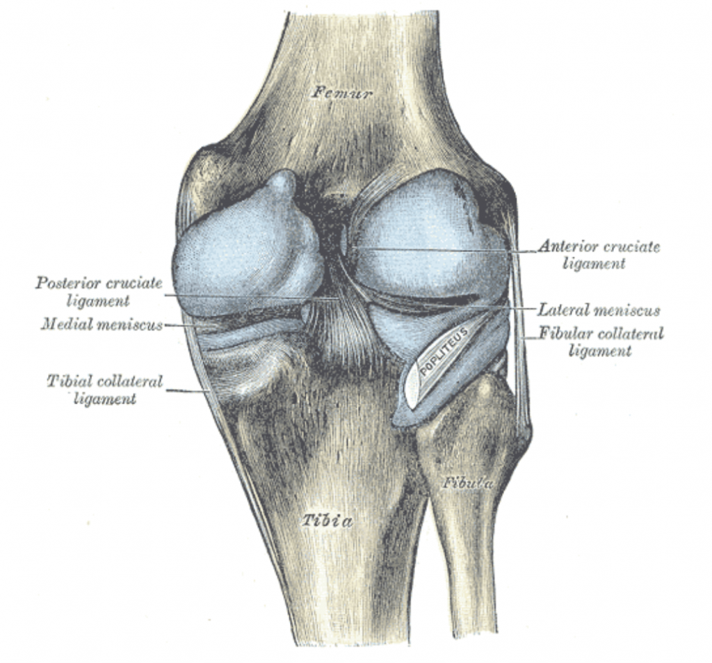 The 8 Most Common Type of Knee Injuries and What YOU Can do to Avoid ...